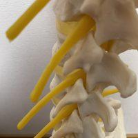 痺れのメカニズム 痺れの回復 効果 ボデイリサーチ